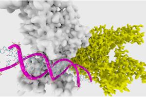 Epigenetics,